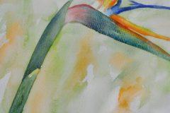 Annemiek ten Brink - Paradijsvogelbloem