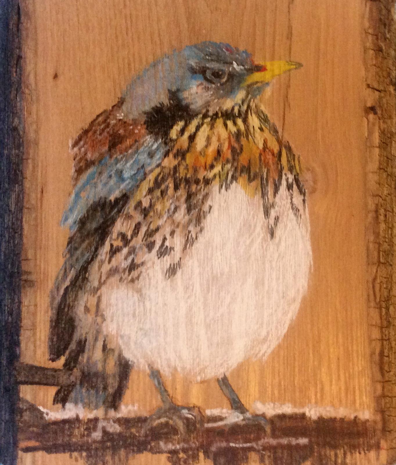 Kramsvogel - Claske de Waal